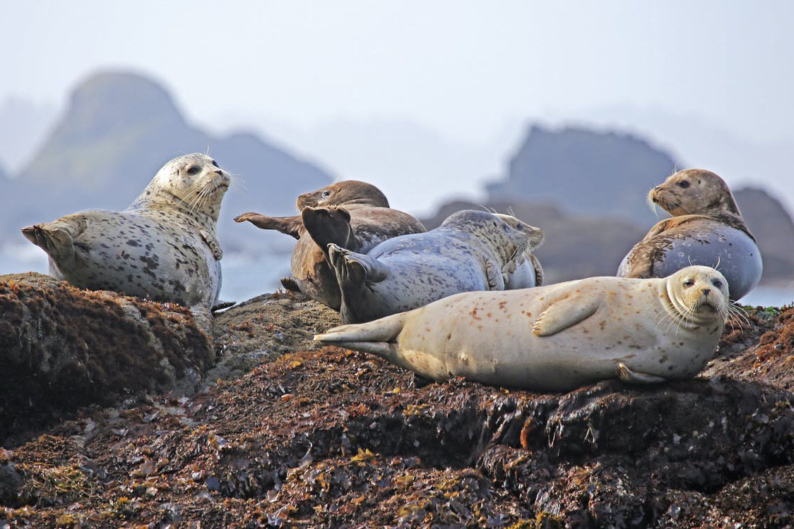 seals resting on rocks by the sea